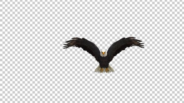 Thumbnail for Eagle Fly