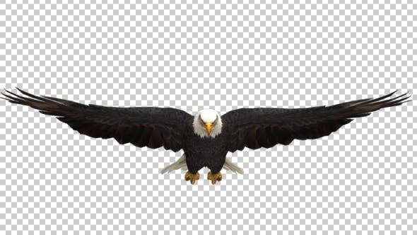 Thumbnail for Eagle Glide