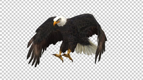 Thumbnail for Eagle Landing