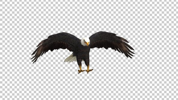 Thumbnail for Eagle Landing Front View
