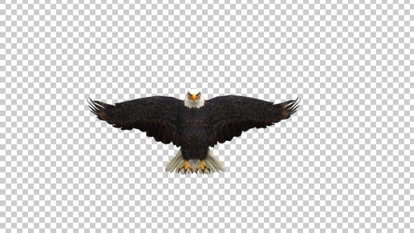 Thumbnail for Eagle Landing
