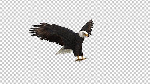 Eagle Landing Left Side