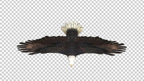 Eagle Glide Top View