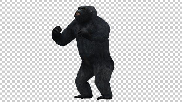 Gorilla Pounding