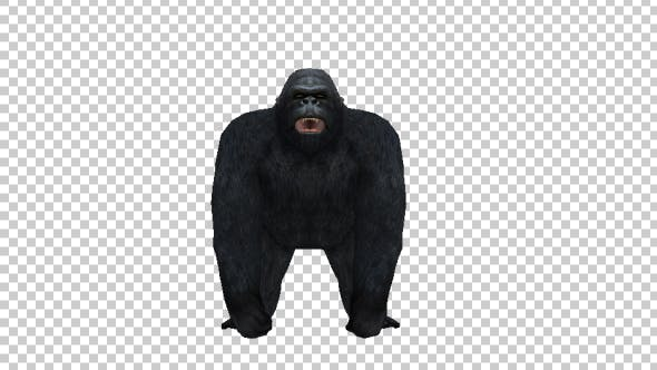 Gorilla Howl