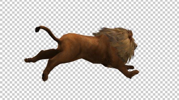 Thumbnail for Lion Running