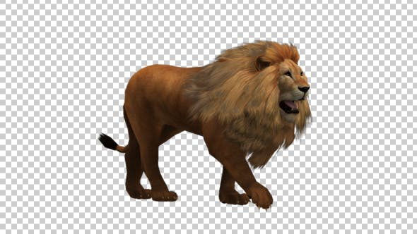 Thumbnail for Walking Lion