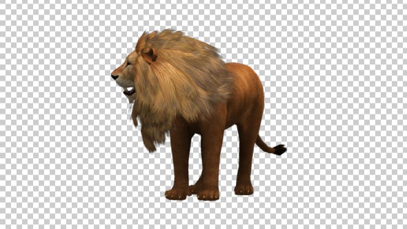 Thumbnail for Lion Looking