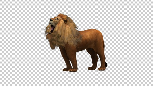 Thumbnail for Lion Roar
