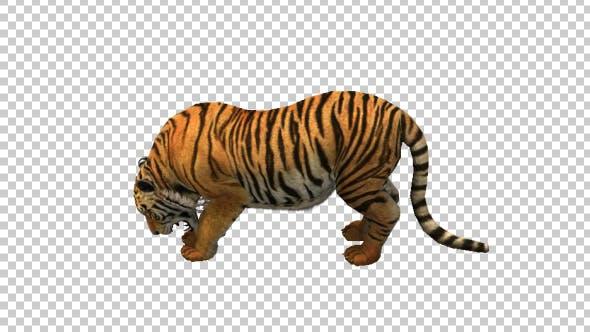Thumbnail for Tiger Eating