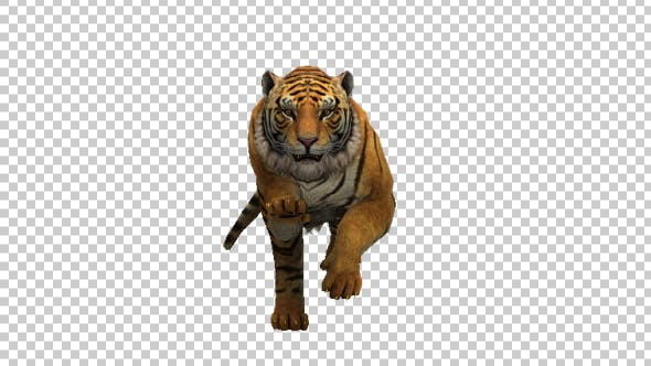 Thumbnail for Tiger Run