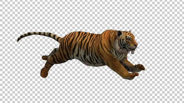Thumbnail for Tiger Run 3