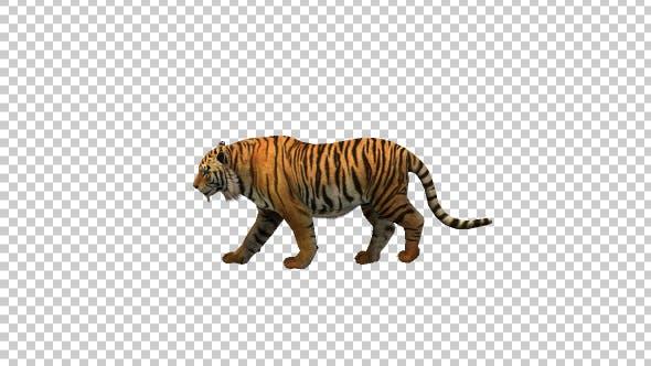 Thumbnail for Tiger Walk 1