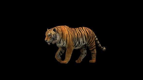 Thumbnail for Tiger Walk 2