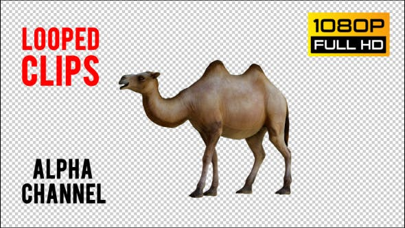 Thumbnail for Camel 2 Realistic