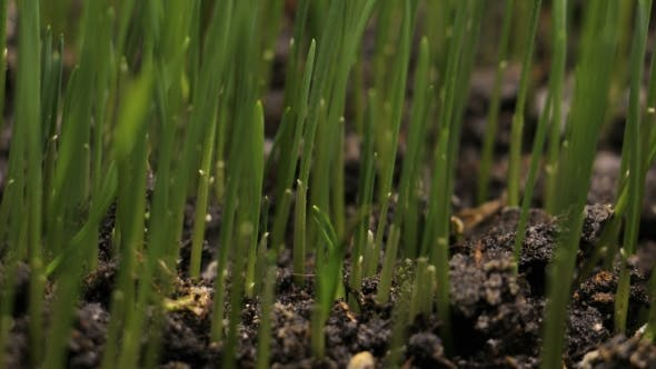 Thumbnail for Plant Growing From Soil  - Beginning New Life