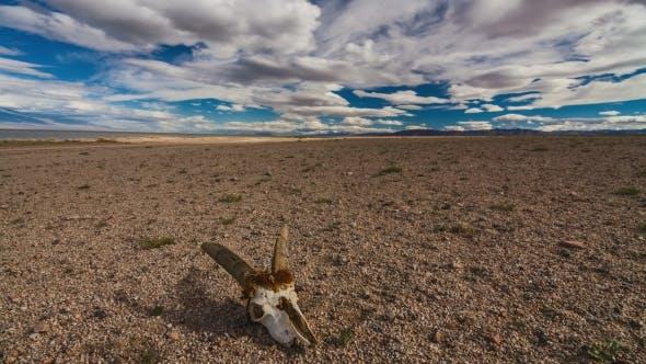 Skull of a Dead Animal in the Gobi Desert. Mongolia