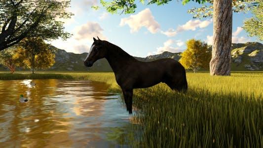 Thumbnail for Horse Landscape