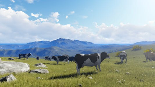 Thumbnail for Grazing Cows