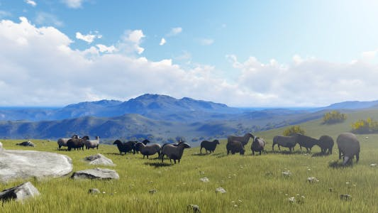Thumbnail for Sheep Grazing