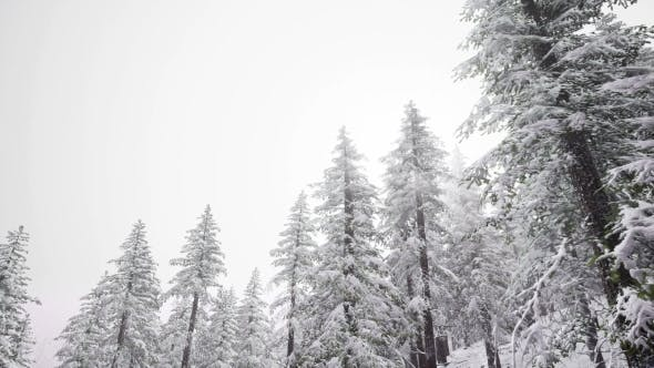 Cover Image for Aerial Snow Covered Trees Landscape