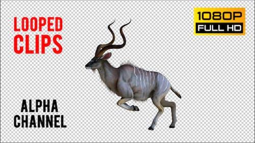 kudu 1 Pack 4