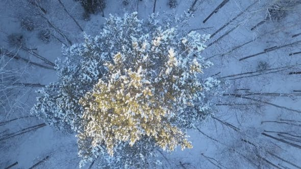 Thumbnail for Aerial Flyover Snow Covered Pines