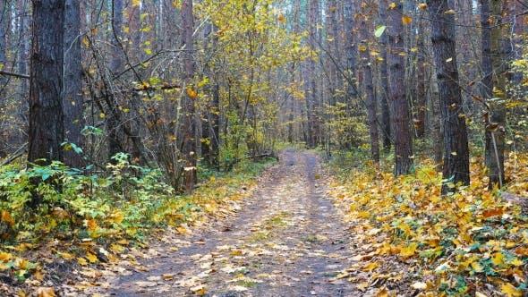 Thumbnail for Straße durch schönen Wald und fallende Blätter