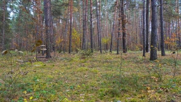 Thumbnail for Schöner Herbstwald, Bäume schwellen in einem Wind
