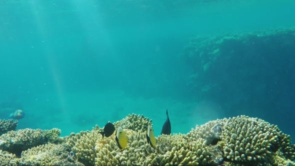 Thumbnail for Amazing Underwater World - Crystal Clear Water with Sun Rays and Corals with Exotic Fish. Copyspace