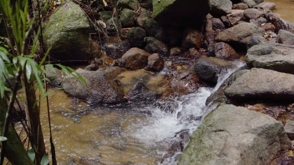 Thumbnail for Mountain Stream with Clean Water