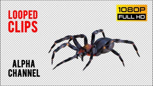 Thumbnail for Spider 1 Realistic Pack 4