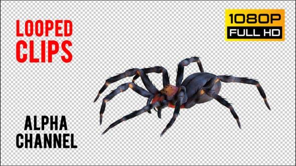 Spinne 1 realistische Packung 4
