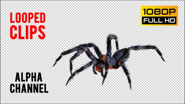 Spider 2 Realistische Pack 3