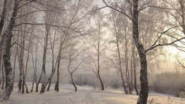 Thumbnail for Sliding Among Birch Trees in Snow Covered Park at Winter Day