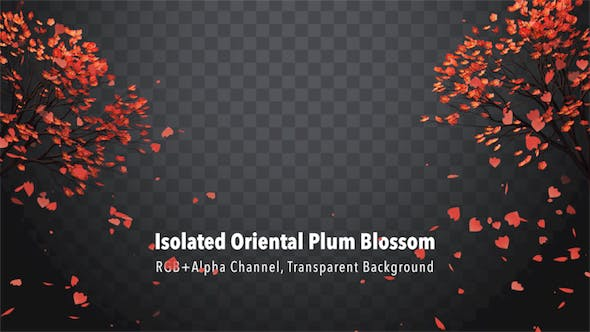Thumbnail for Isolated Oriental Plum Blossom