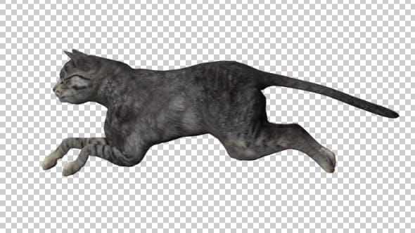Thumbnail for Cat Running