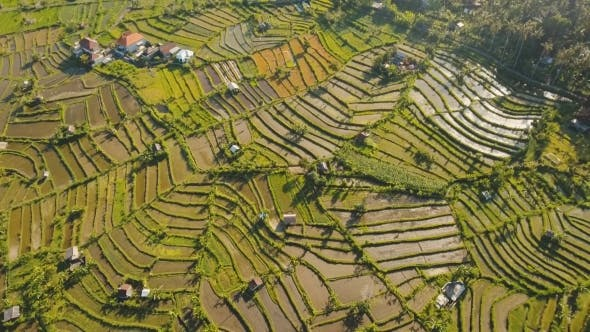 Thumbnail for Landscape with Rice Terrace Field Bali, Indonesia