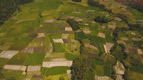 Thumbnail for Landscape with Farmlands and Rice Terrace Field Bali
