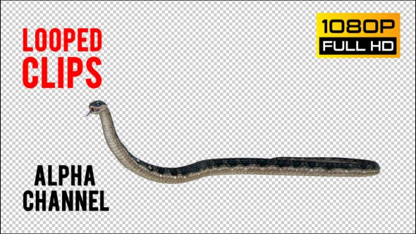 Thumbnail for Snake 3 Realistic Pack 3