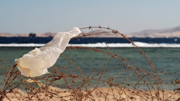 Thumbnail for Old Barbed Wire in Front of Sea