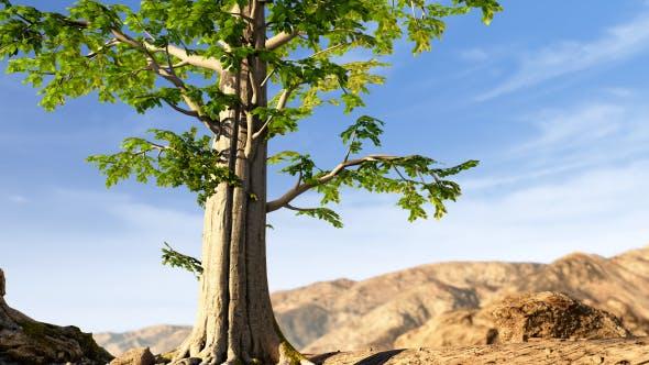 Thumbnail for Wild Life In Desert 2