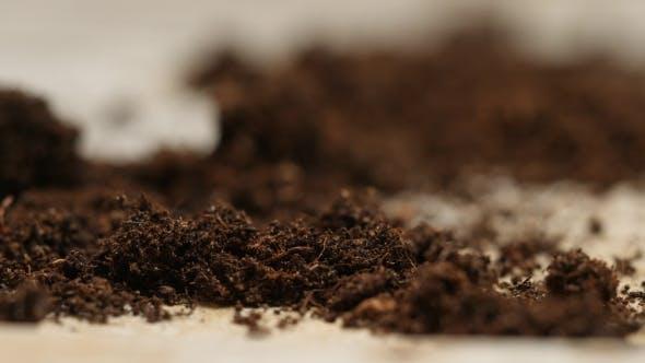 Thumbnail for Soil on a Studio Table