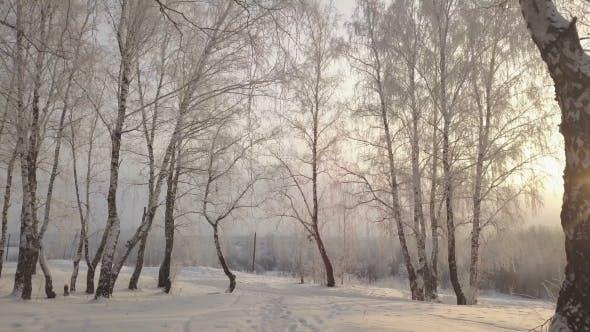 Thumbnail for Rutschen zwischen Birken im schneebedeckten Park am Wintertag