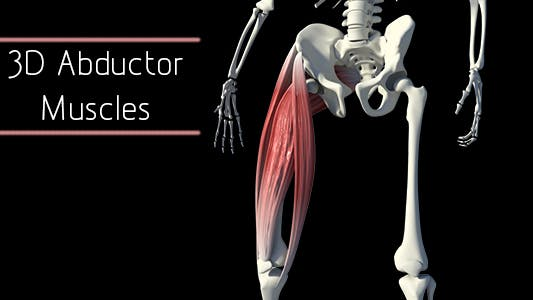 Thumbnail for 3D Abductor Muscles