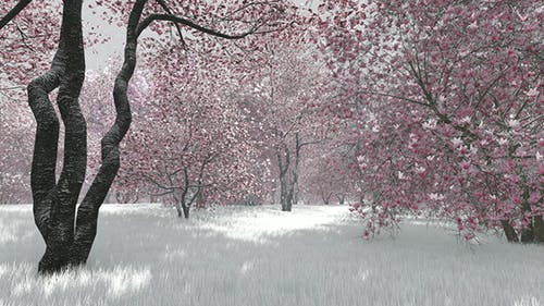 Nature Season