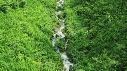 Mountain Small Stream That Flows Down From the Mountains Among the Green Food. Top View of a