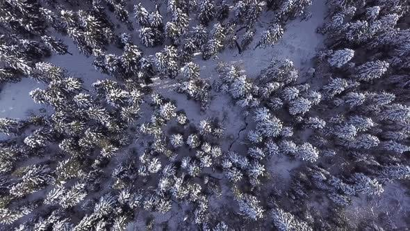 Thumbnail for Coniferous Forest. View From Above . Aerial View