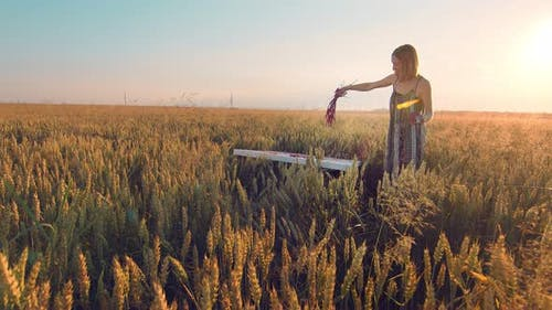 Woman Artist Who Paints a Picture of Ears of Wheat at Sunset. The Artist Paints a Picture with Ears