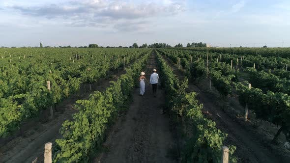 Thumbnail for Farm Romantic Couple Holding Hands Walking Amongst Grapevines, Drone View on Landscape